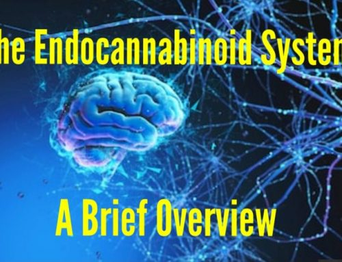 What is the Endocannabinoid system?: A Quick Overview