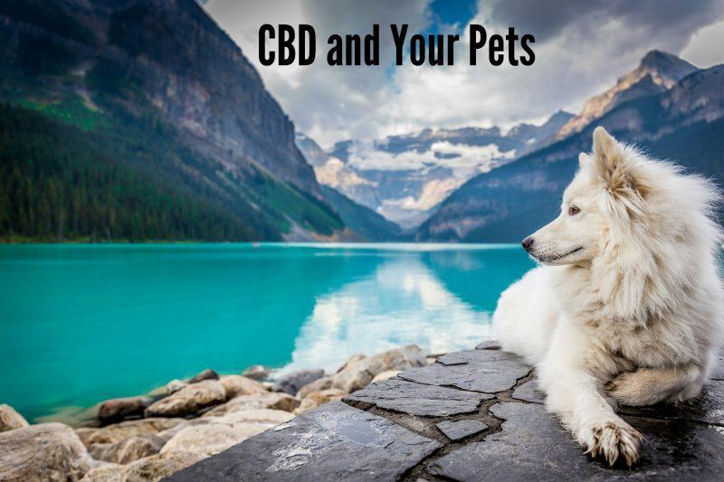 Pet CBD