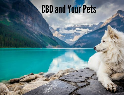 CBD and Your Pets