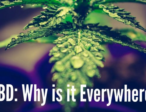 CBD: Why is it Everywhere?