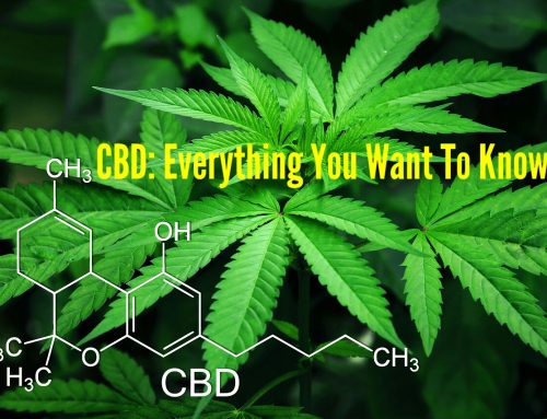 Everything You Want To Know About CBD